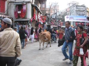 Nepal & Abu Dhabi 2012 150
