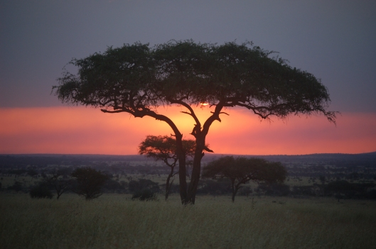Sundown in the Serengeti, Tanzania