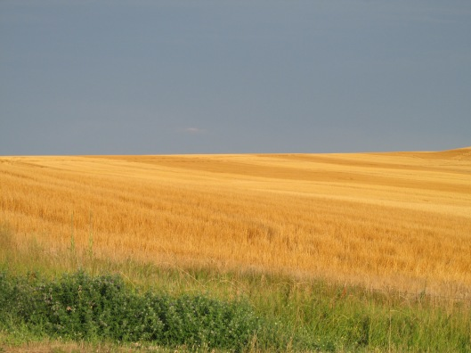 Perhaps my favorite view of the trip: Amber waves of grain in Buffalo Gap National Grasslands, western South Dakota
