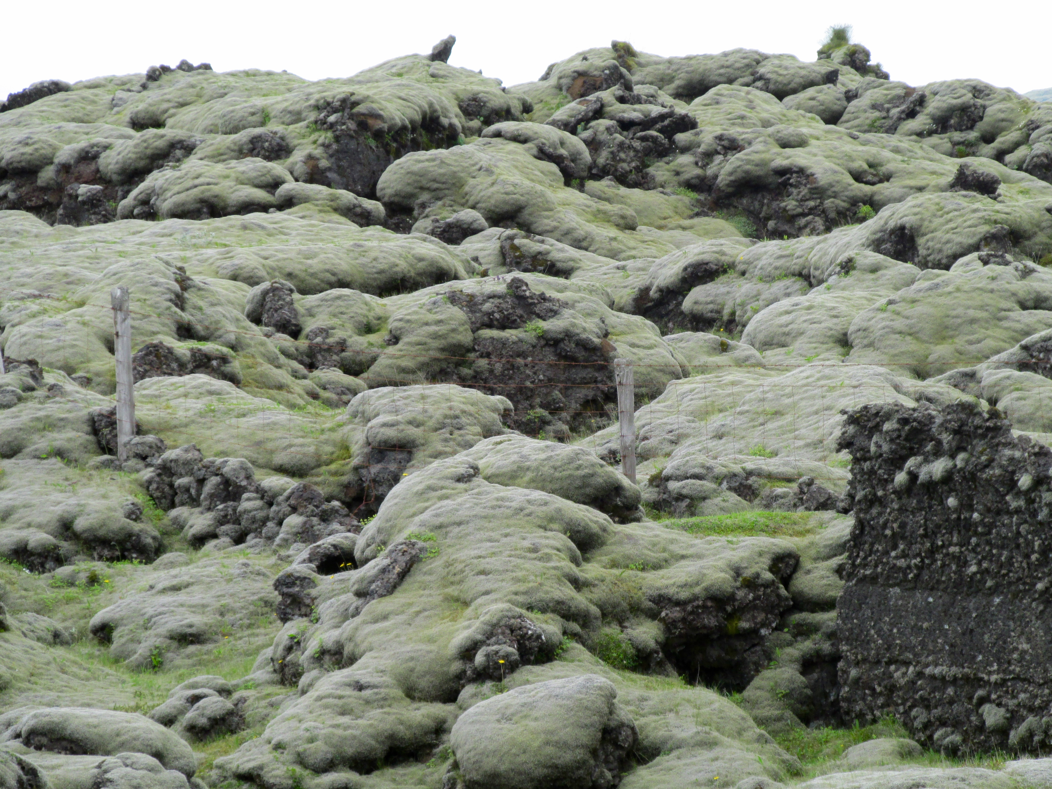 Iceland June 2014 405