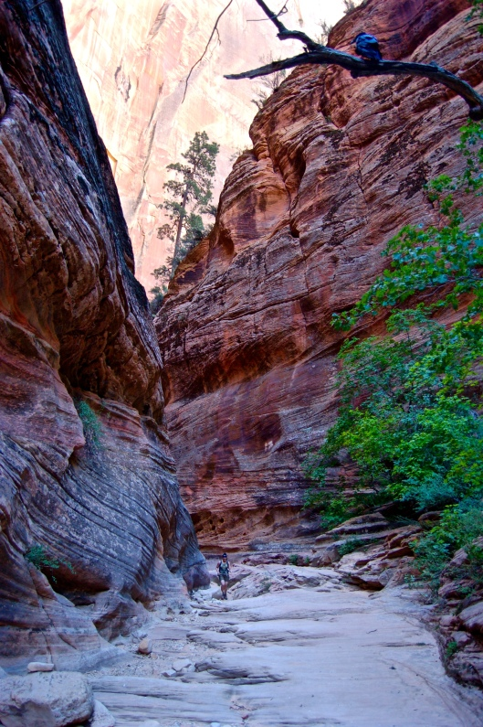 Zion and Bryce 2012 048